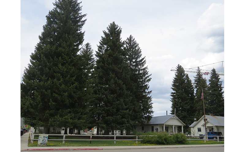 Ketchum To Plant New Trees At Arbor Day Celebration